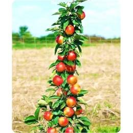 Саженцы яблони колоновидной Элита