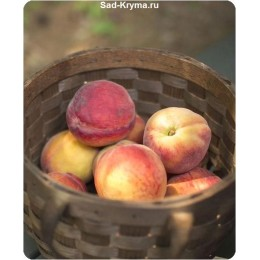 Саженцы персика Княжеград