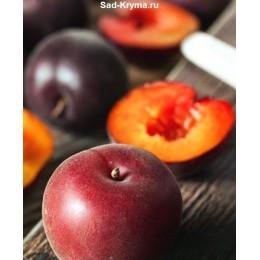 Саженцы персика Королевский