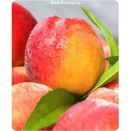 Саженцы персика Свит Леди