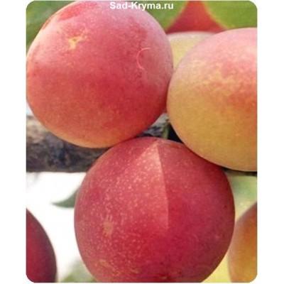 Персиковая > цена и фото саженца