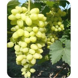 Саженцы винограда Долгожданный