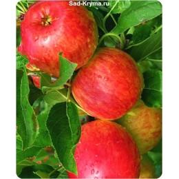 Саженцы яблони Дельбарестивале