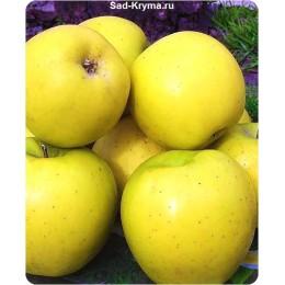 Саженцы яблони Голдстар