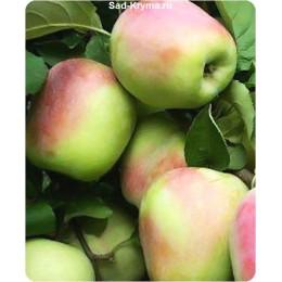Саженцы яблони Памяти Есаула