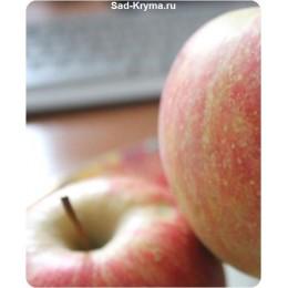 Саженцы яблони Ред Чемпион