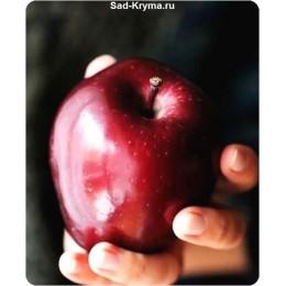 Саженцы яблони Сад любви
