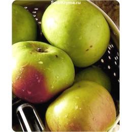 Саженцы яблони Хамелеон